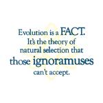 Evolution - Goodies