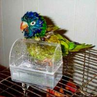 Birdie Stuff