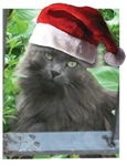 Christmas Grey Kitty with a Santa Hat