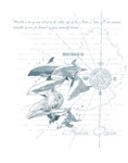 Mru dolphin