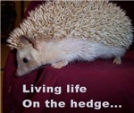 Living on the hedge...