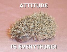 Attitude is Everything Hedgehog