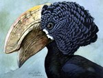 Illustration of a Hornbill
