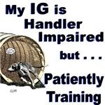 IG/Italian Greyhound Agility