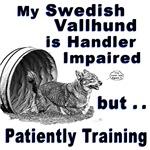 Swedish Vallhund Agility