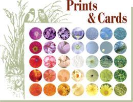 Art Prints & Cards