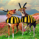 Land of the Dogbees