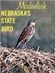 Meadowlark Bird