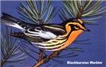 Blackburnian Warbler Bird