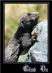 Climb On Lizard