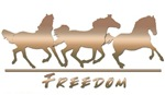Horse - wild & free