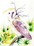 Owl; Furze Wisdom