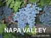 Napa Valley Gifts