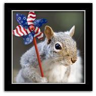 Adorable Squirrels