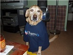 Dogs for Obama