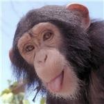 Coffee w/a Chimp
