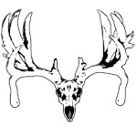 Tear drop buck skull