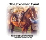 purchases of horse t-shirts & gifts help support The Exceller Fund