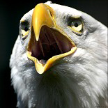 Eagle Lover Gift Ideas