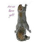 Funny Climbing Squirrel