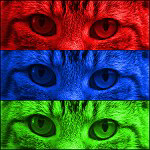Pop Art Cat Eyes