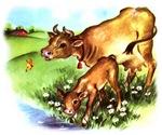 Cute Cow Calf Farm