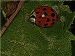 Stylized Ladybug