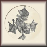 Amphibian Study in Ink