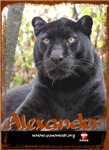 Alexander the Leopard-Childrens Clothing
