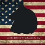 Patriotic Rough Collie Head Png