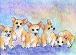 A cuddle of corgis