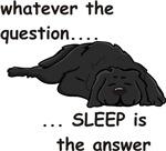 Sleep is the Answer