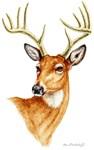 Whitetail Deer by Marc Brinkerhoff