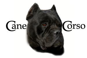 Handsome Black Cane Corso