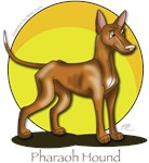 Pharaoh Hound Products