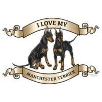 Standard Manchester Terriers