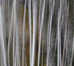 Autumn Illusions 1