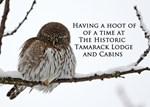 Tamarack Owl