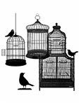 3 Bird Cages & Birds