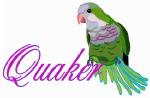 Quaker (Monk) Parrot