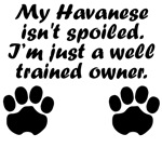 Well Trained Havanese Owner