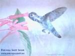 PSDB Hummingbird Collection Print