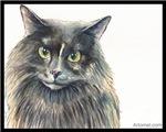 Cat-Cat the Masked Marauding Norwegian
