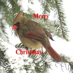 Christmas Ornaments & Greeting Cards