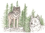 Guidence Wolf
