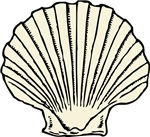 Sea Scallop Shell