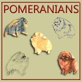 POMERANIANS - 78 Designs