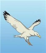 Seagull - Color