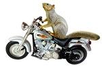 Motorcycle Squirrel