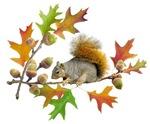 Squirrel Oak Acorns